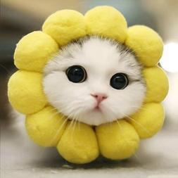 1PC Sunflower Pet Head Cover Cute Sponges Yellow Pet Hair <f