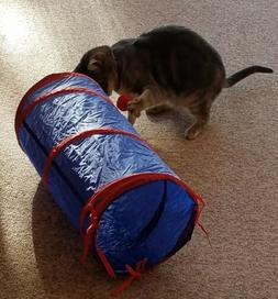 Cat Tunnel with Dangle Toys