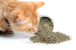 Cat Catnip by Crack, Premium Blend Safe for, Infused with Ma