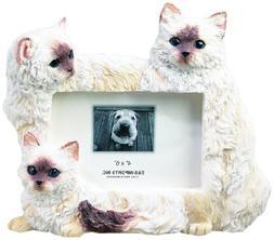 E & S Pets 35297-1 Large Cat Frame