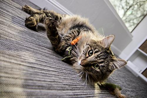 SmartyKat and Cat