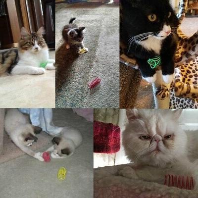 10Pcs Kitten Playing Bright Springs Supplies