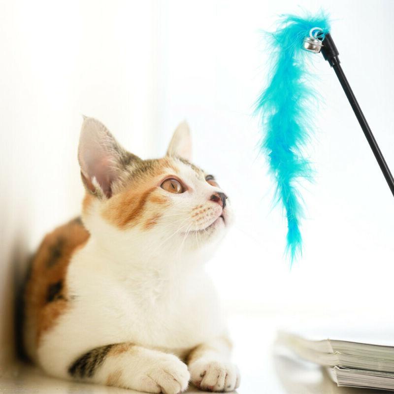 10Pcs Set Lot Catnip Kitty Kitten