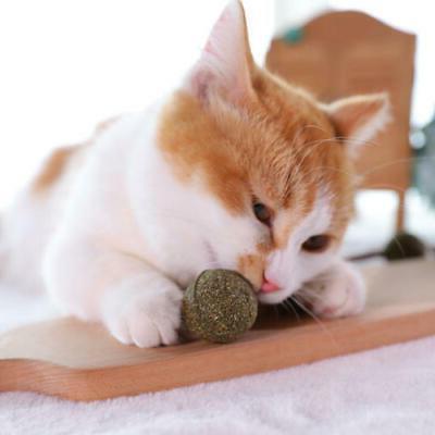 1pc Ball Cat Grass Pet Supplies Toy