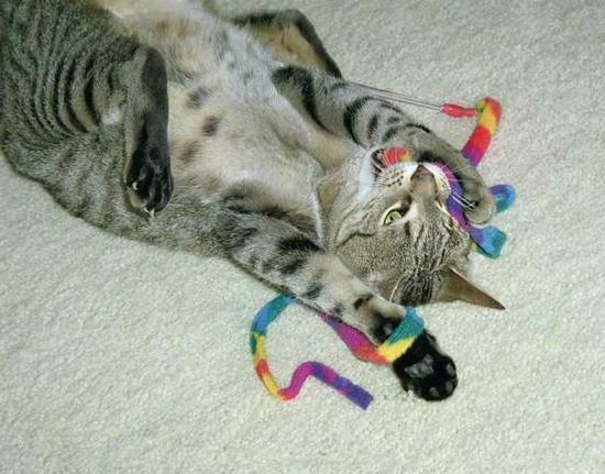 2 - Ribbon Cat Dancer Cat Toy Rainbow -Free