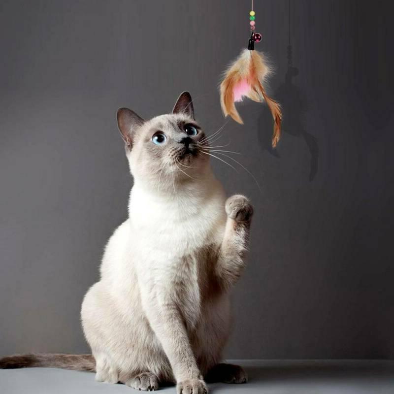 20pcs Cat Play Kitten Rod Balls