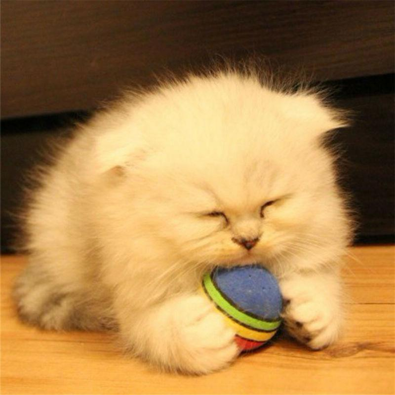 6pcs Pet Cat Kitten Soft Rainbow Balls Toys