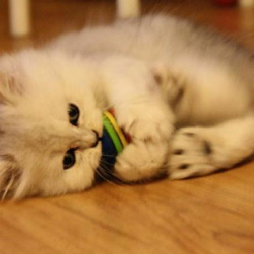 6pcs Pet Cat Kitten Soft Foam Balls Colorful Funny Toys