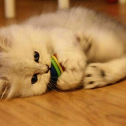 6X Cat Kitten Soft Foam Play Balls Activity Toy