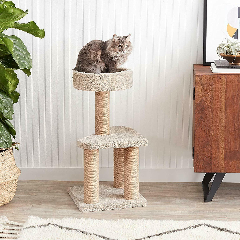 AmazonBasics Cat with