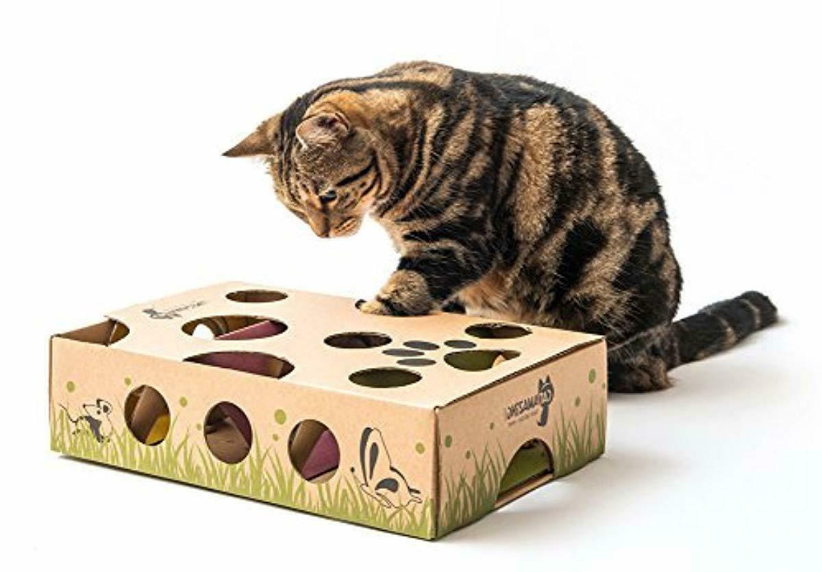 Cat Amazing – Best Cat Treat Puzzle Feeder