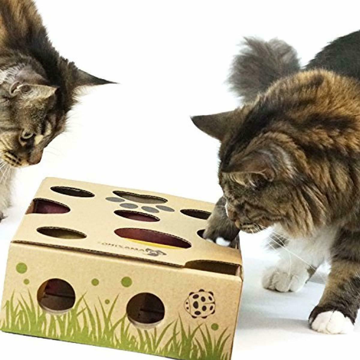 Cat – Best Cat Toy Ever! Interactive Treat Maze Puzzle Feeder Ca