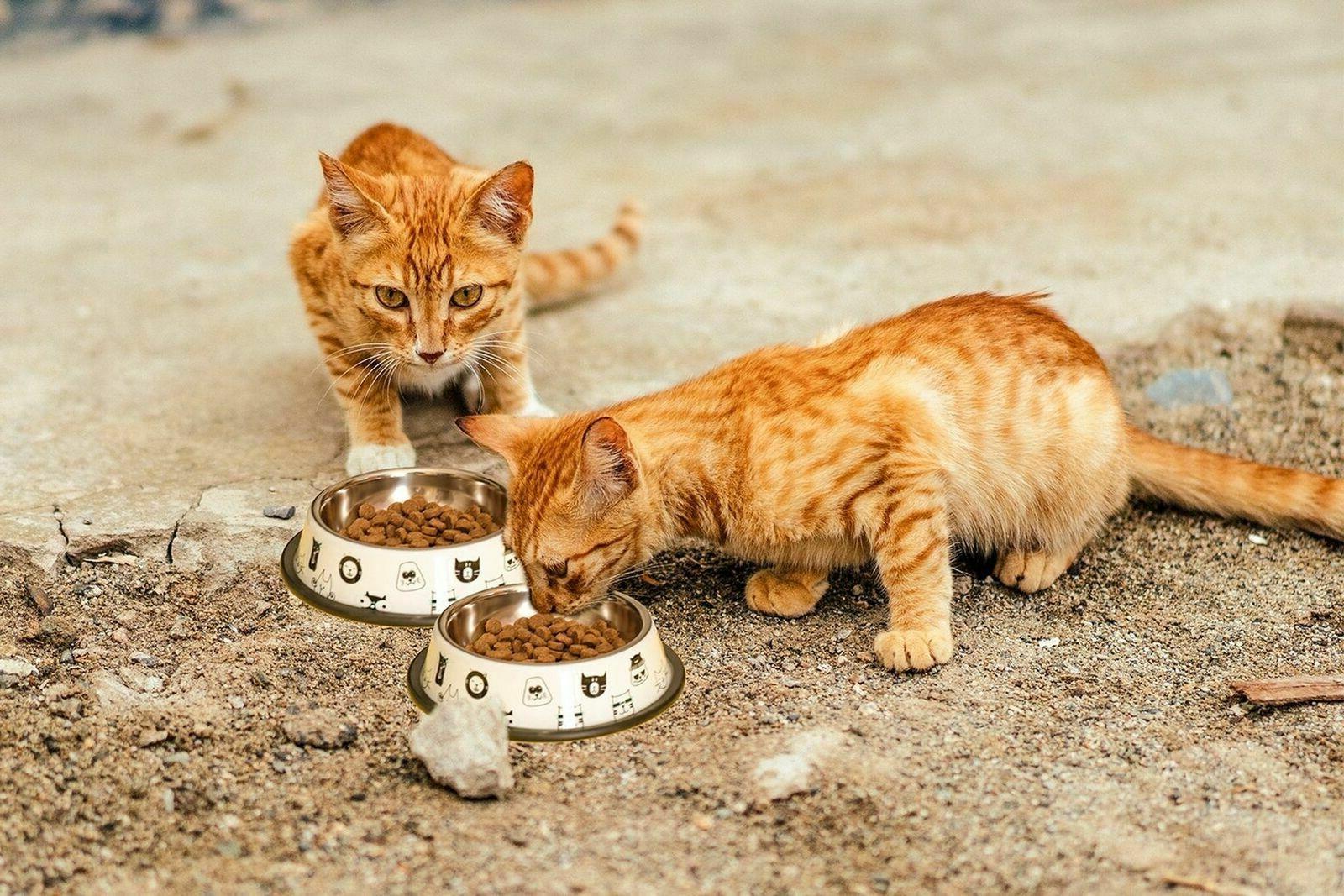 Cat Bowl Includes Bowls, Toys 1