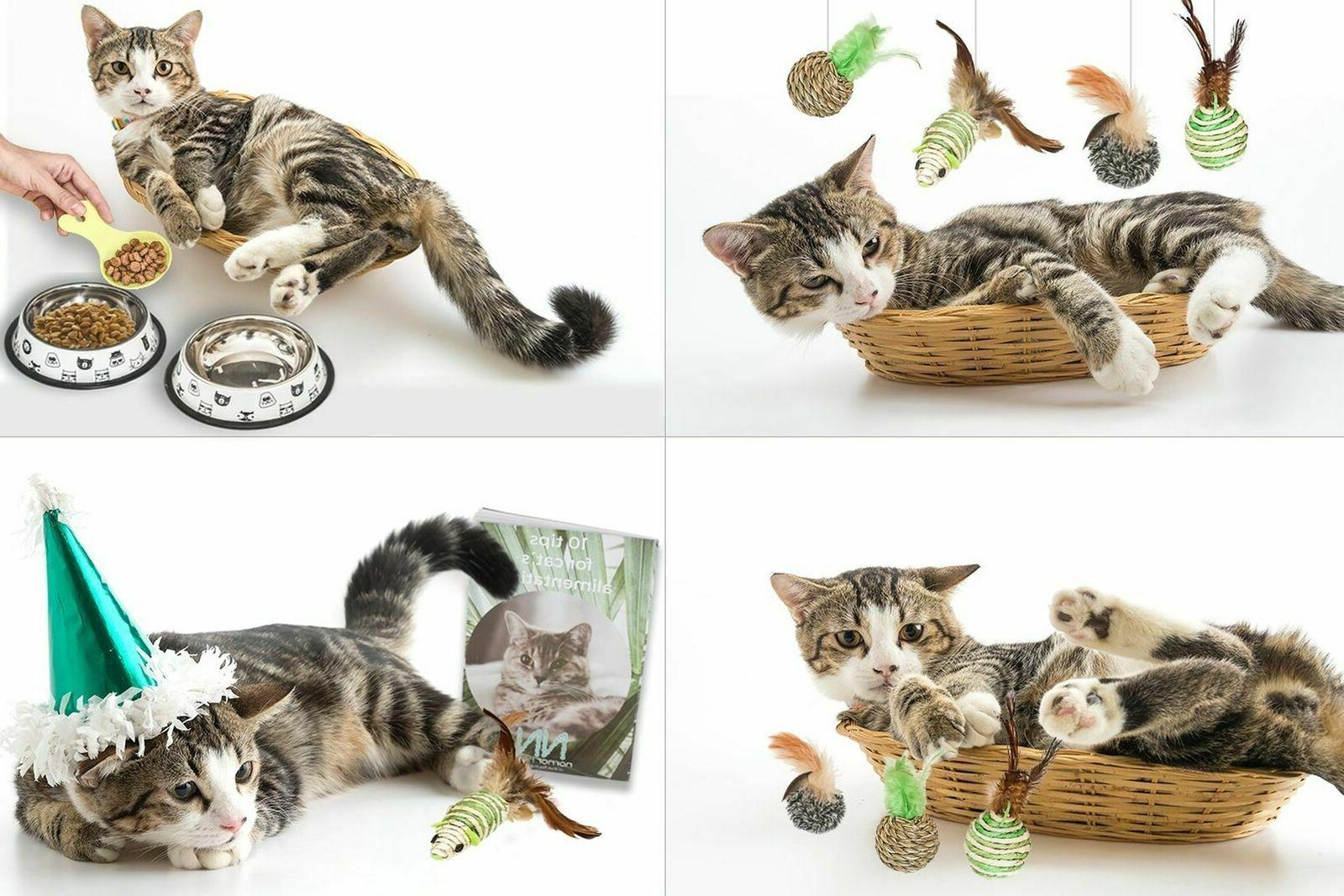 Cat Includes Toys 1 Cup for Alimentation...