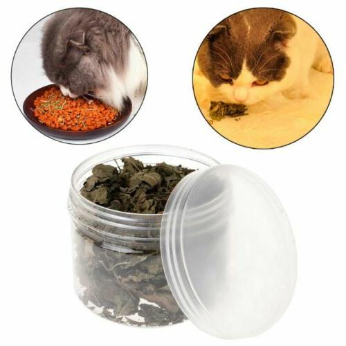 Cat Catnip Leaf Kitten Multi