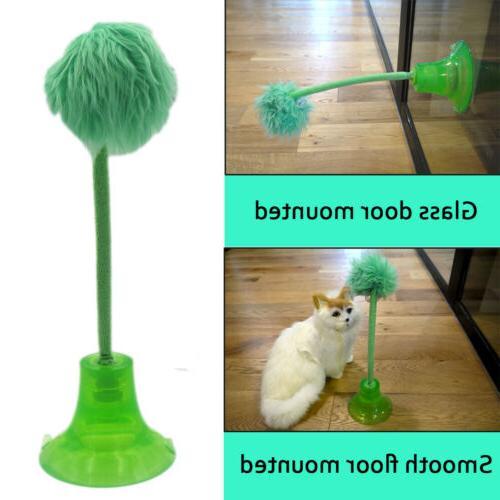 cat kitten track toy balls teaser feather