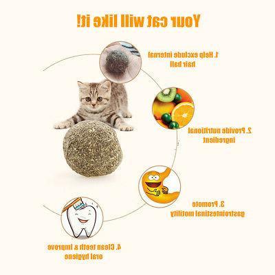 Cat Catnip tooth Chew V9P7