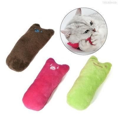Cat Accessories Outdoor Color