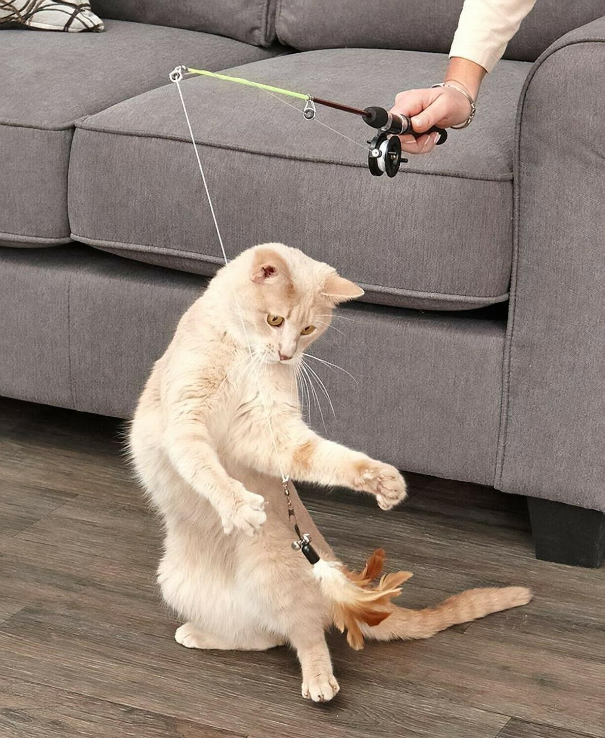 Cat Teaser Toy Laser and