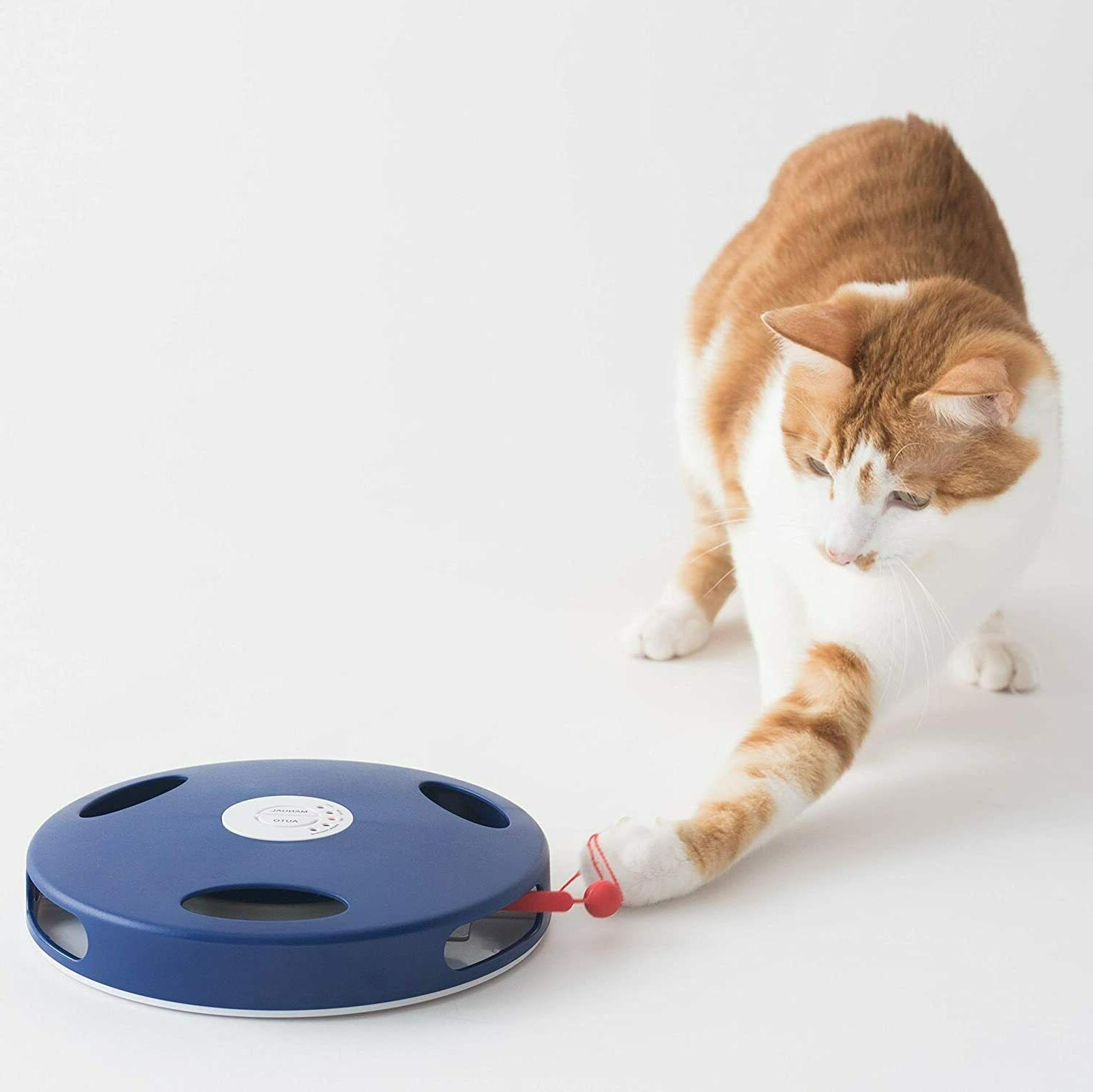 catch the mouse tail 2 cat toys