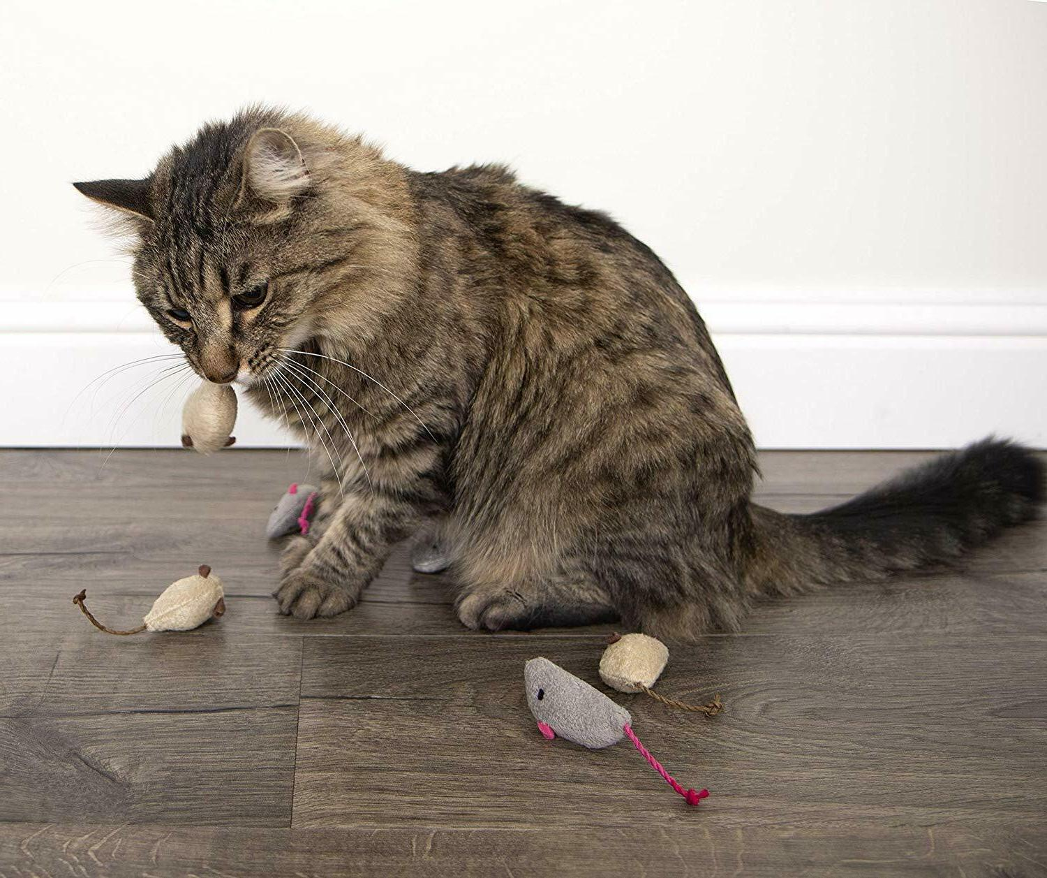 SmartyKat | Mouse Cats |