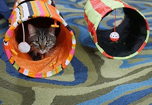Pet Magasin Collapsible Cat Tunnel Toys - Tunnels Tubes Crinkle for Large Cats Other House Animals by