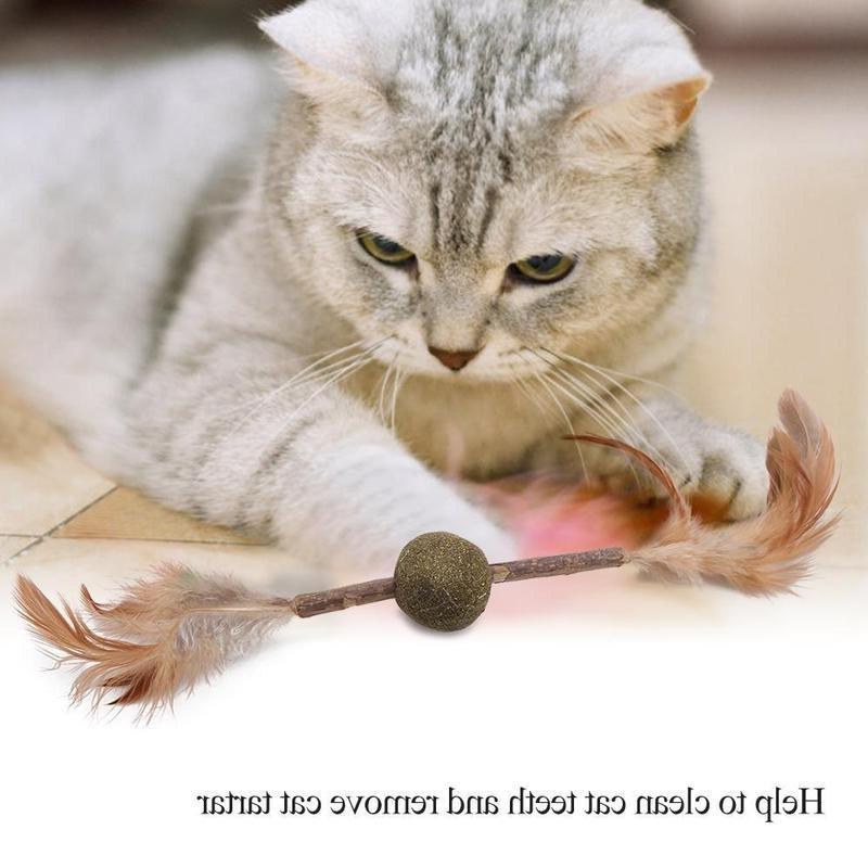 <font><b>Cats</b></font> Catnip <font><b>Toy</b></font> <font><b>Cat</b></font> Health Clean And Pet <font><b>Toys</b></font>