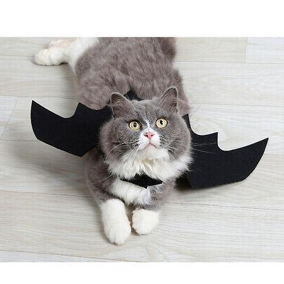 Halloween Dress Cat Design
