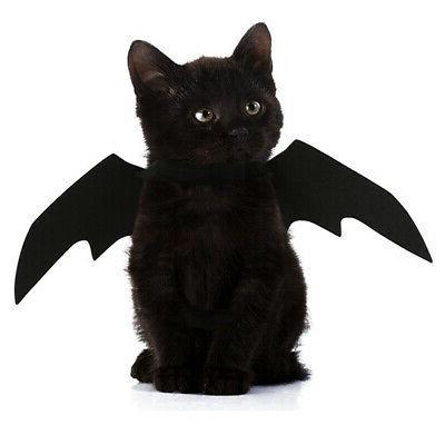 halloween fancy dress pet cat kitty bat