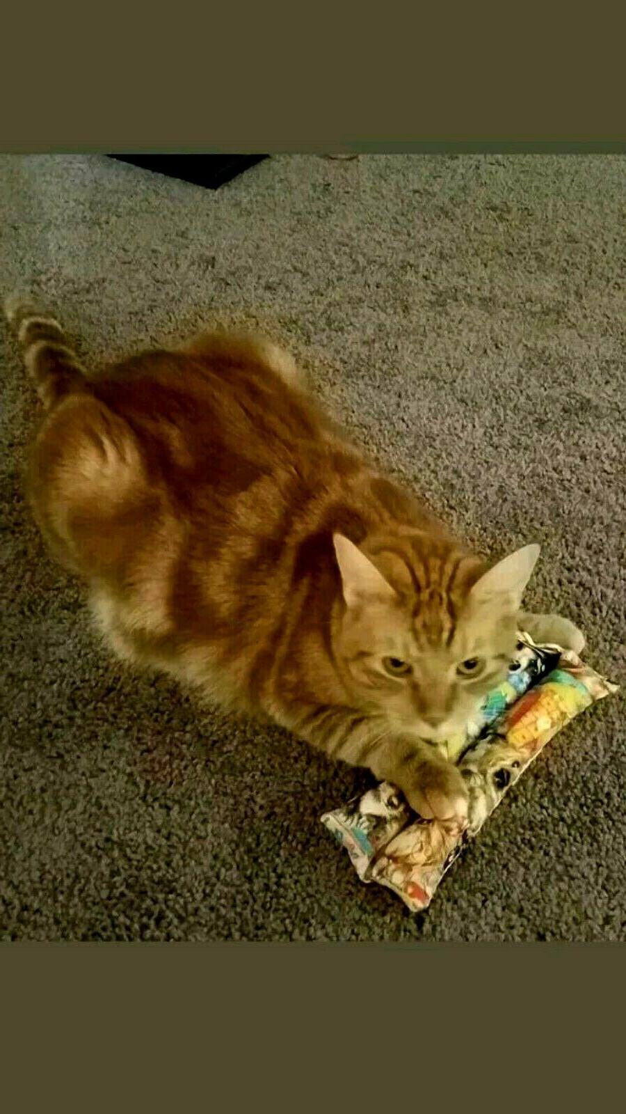 Kitty Catnip Sticks, cat cats