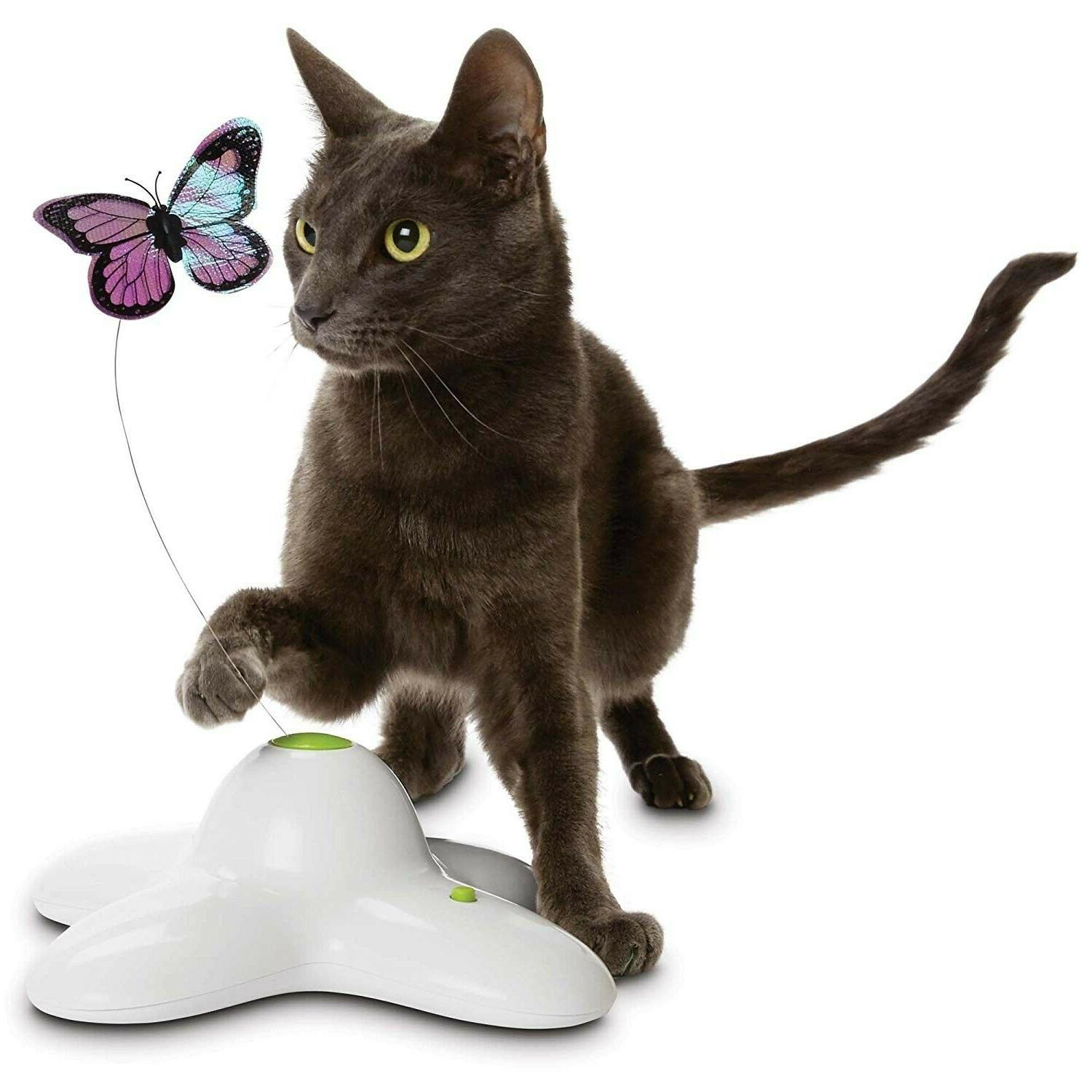 leaps and bounds electric flutter butterfly cat