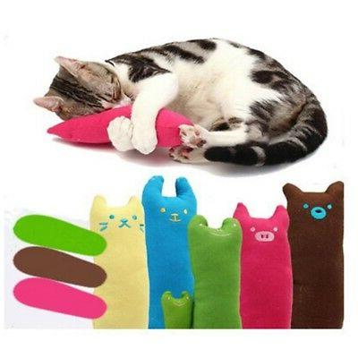 pet cat dogs chew catnip cleaning teeth