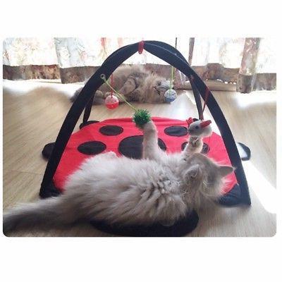 Pet Activity Exercise Kitten