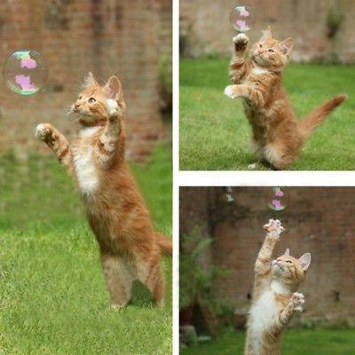 pet cat toy natural catnip bubbles toys