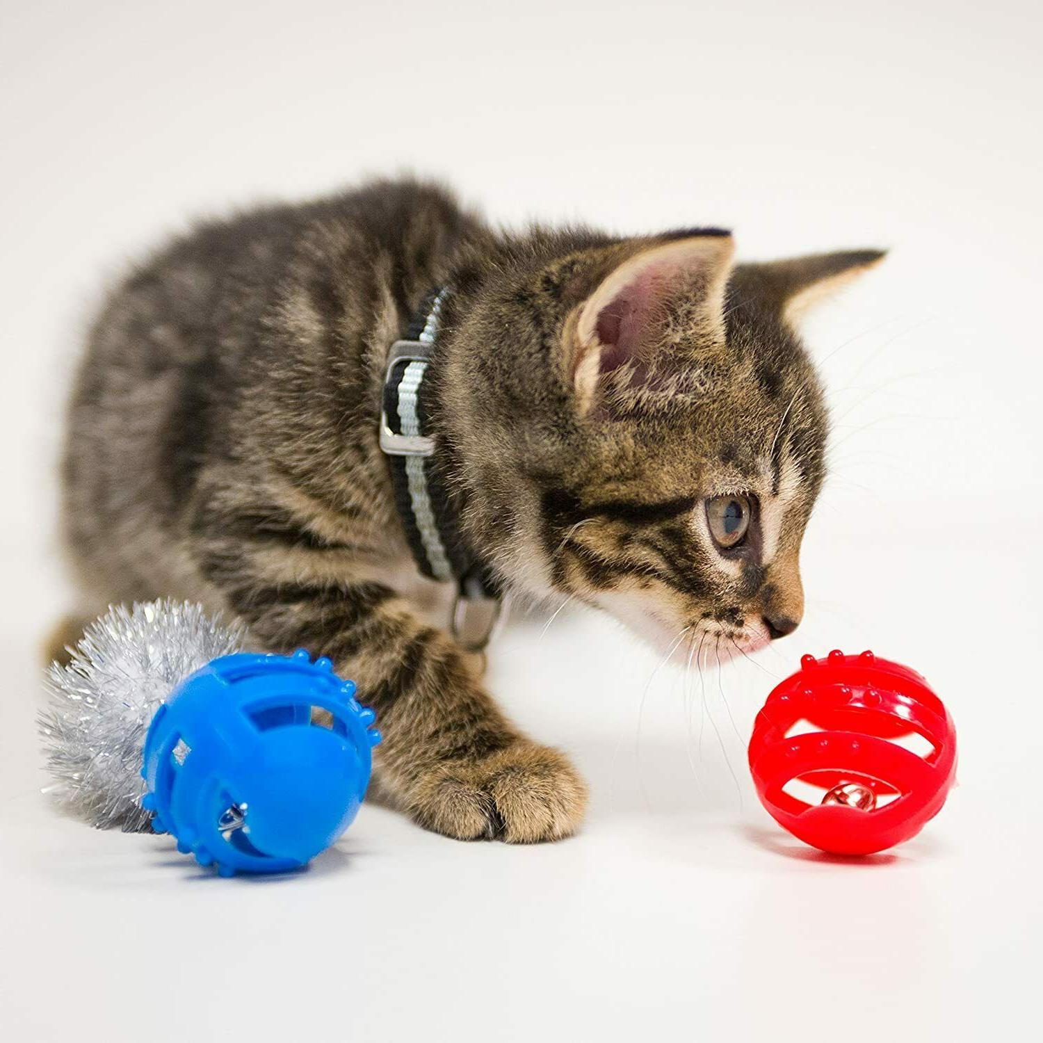 Pet Variety Pack And Durable For Play of