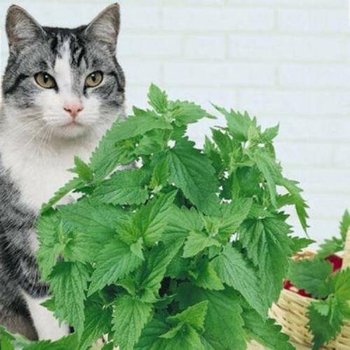 Pet supplies natural cat catnip kitten