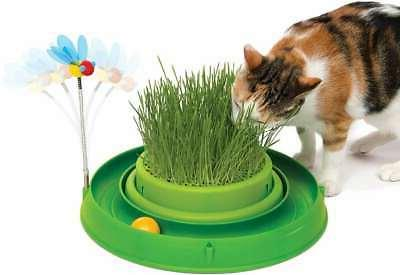 play circuit ball cat toy with scratch