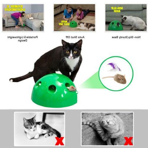 Motion Cat Tease Pet Funny