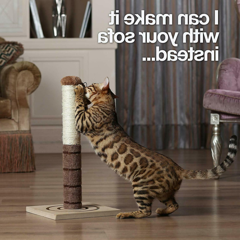 Cat - Cat Kittens