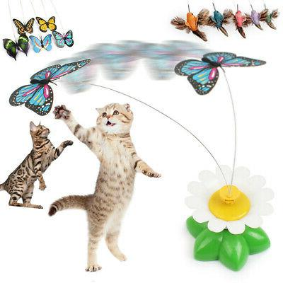 US Cat Butterfly Play