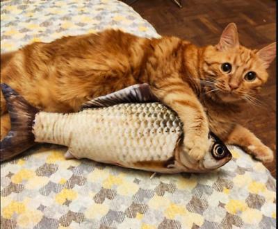 US Fish Pet Kitten
