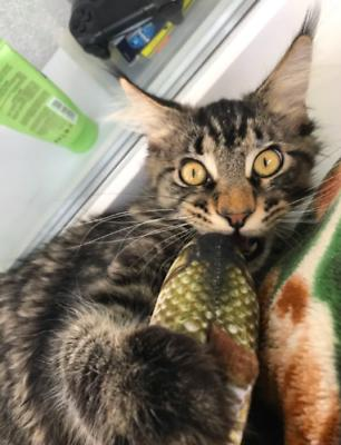 US Realistic Fish Stuffed Pet Interactive Kitten Play Kicker