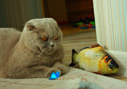 US Fish Catnip Pet Kitten Play Kicker