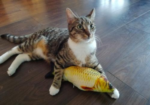 US Realistic Cat Fish Mint
