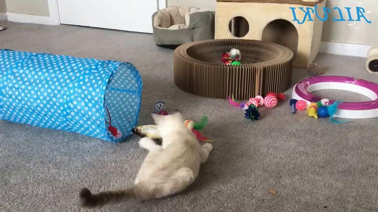 Variety Catnip Toy Including Way Toys - Toys Assortments