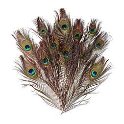 "Natural Peacock Feathers 30 Pcs 10-12"" Wedding Christmas Hal"