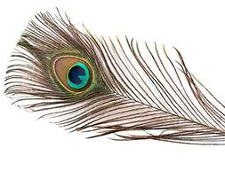 Natural Peacock Feathers, 25-35 inches, Long, Wholesale,  pe