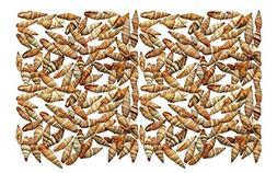 Quality Selected Seashells - Approx 100 shells - Granular Mi