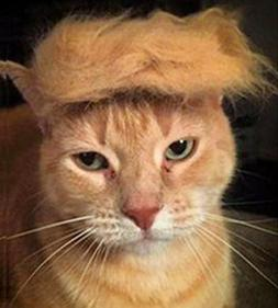 Trump Style Cat Wig Pet Costume, Donald Dog Head Wear Appare